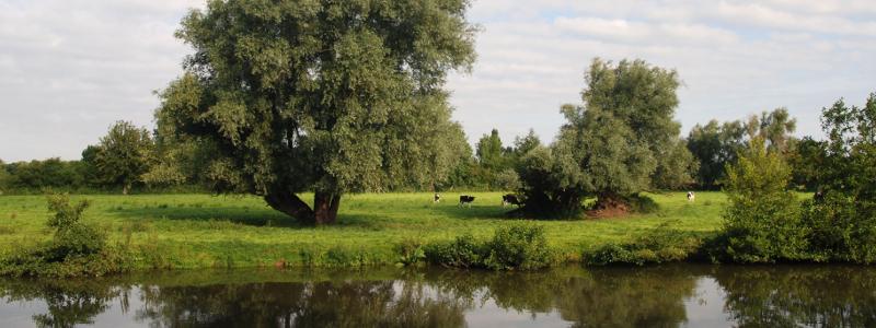 Marais d'Aymeries